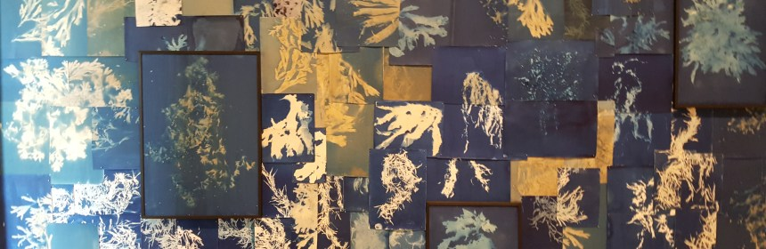 Cyanotype collage from Heavy the Sea, by Esther Teichmann