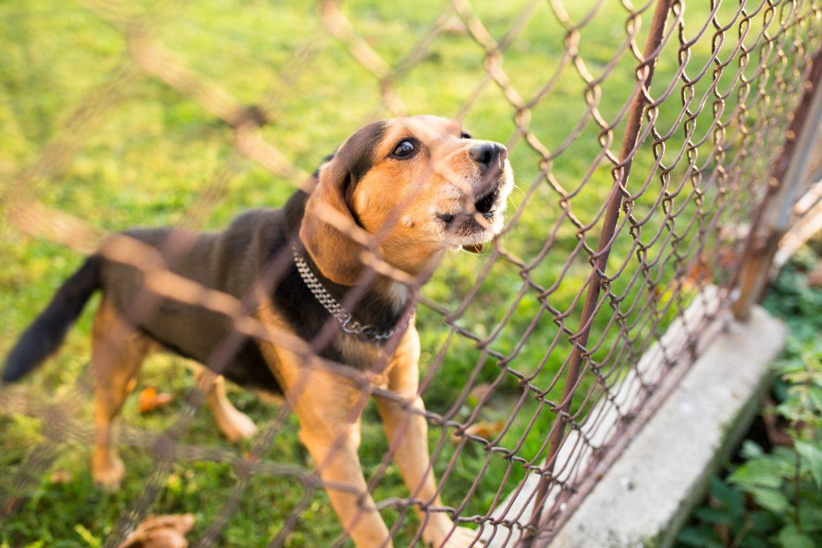 Fullsize Of Dogs That Dont Bark