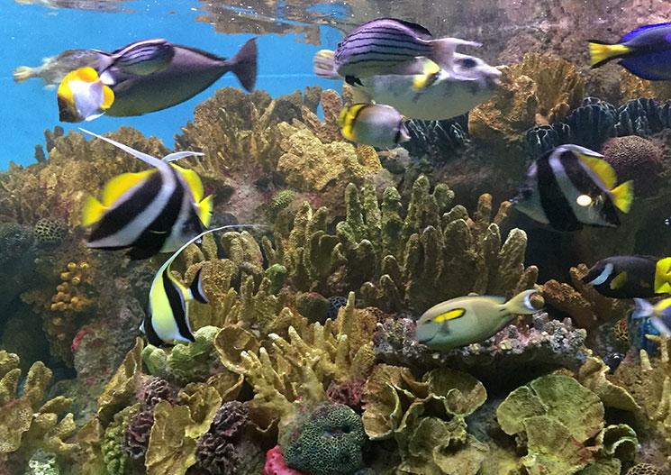 aquario-em-boston-peixes2