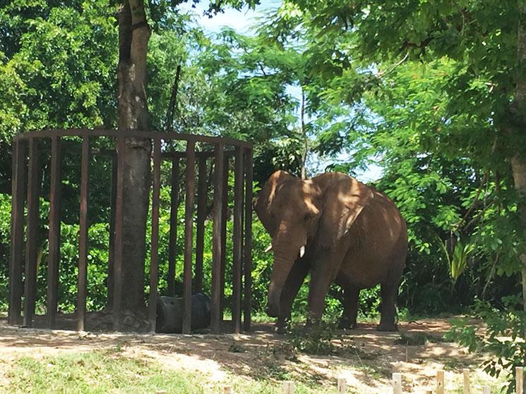 zoo-de-miami-17