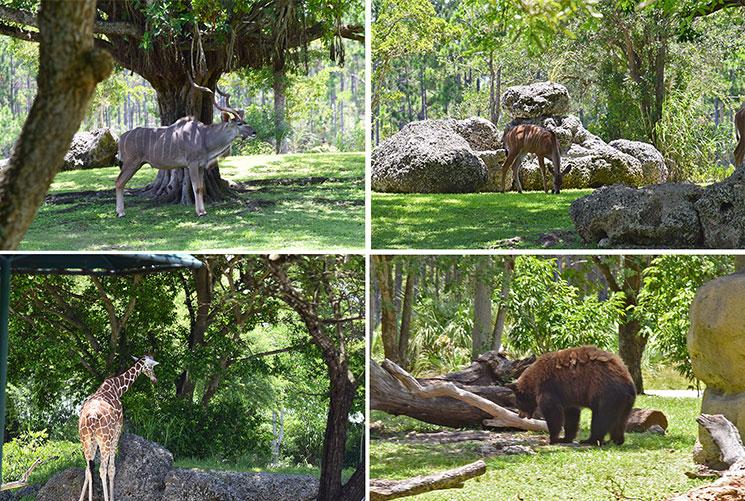 zoo-de-miami-2