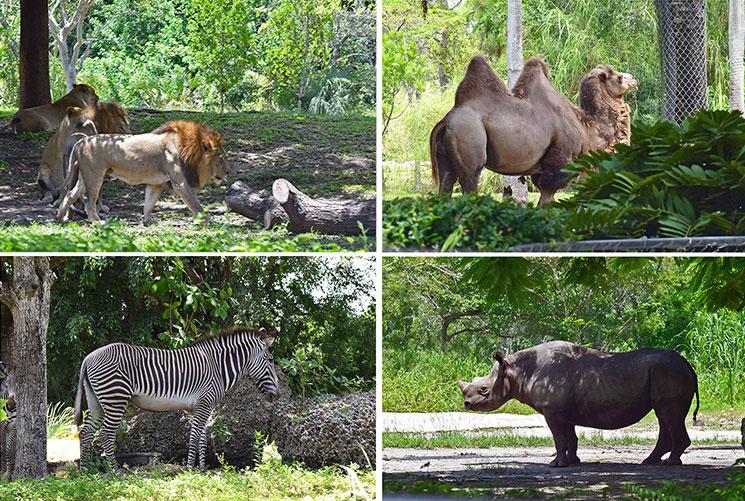 zoo-de-miami-4
