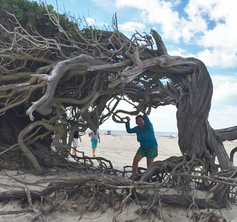 Árvore da Preguiça em Jeri