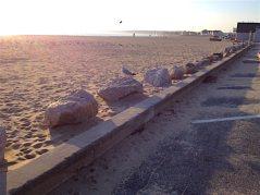 Rocks, Birds, Beach copy