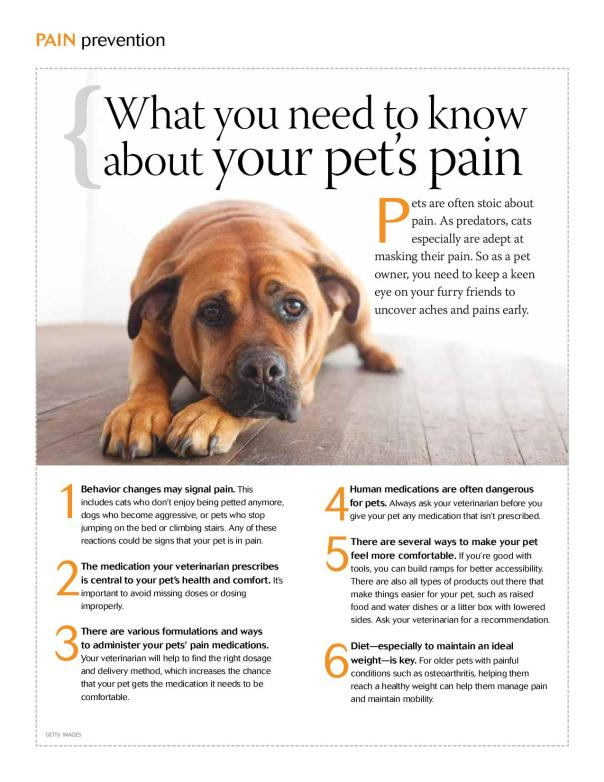 What you need to know about your pets pain