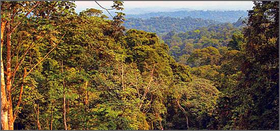 O Maiombe é uma das sete maravilhas naturais de Angola