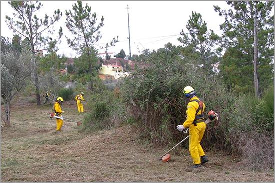 Prevenção com Limpeza das Florestas