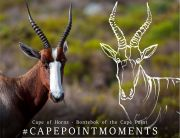 Cape of Horns