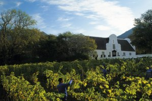 Groot-Constantia-About-Us