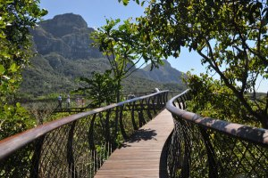 Cape-Town-Big-7-Kirstenbosch