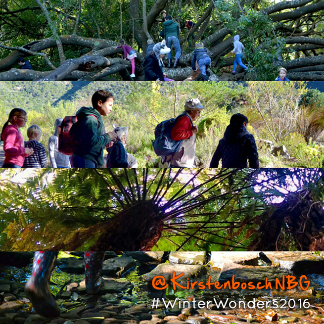Kirstenbosch Winter Wonders Holiday Programme