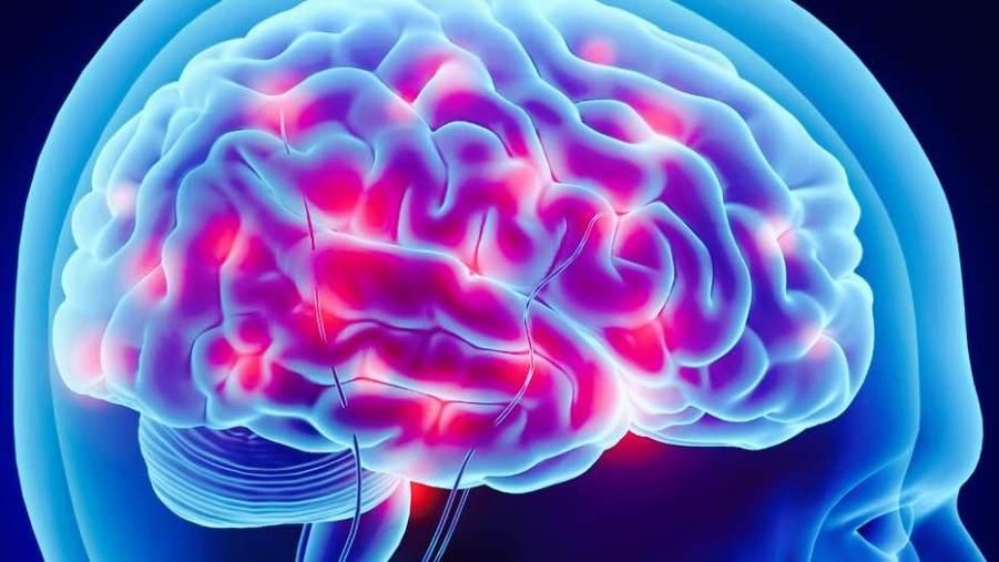 endorphins-brain-levels