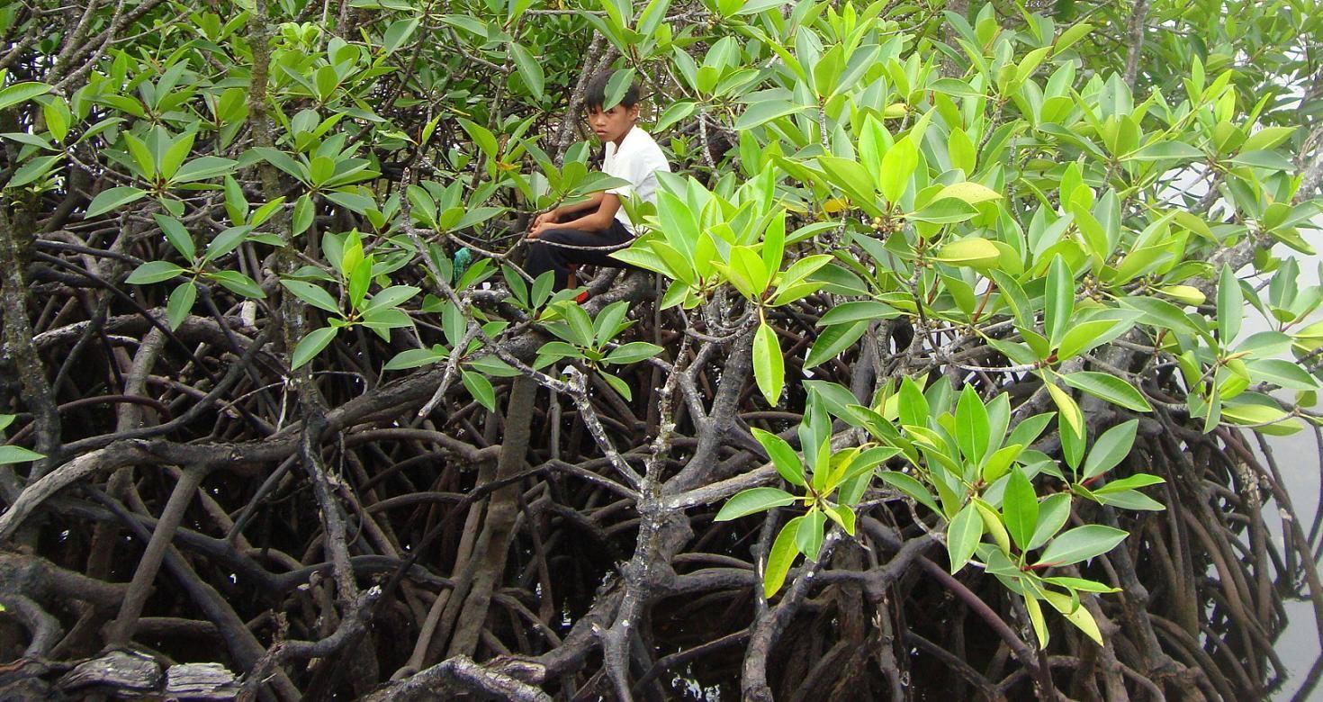 mangroves britania, surigao del sur