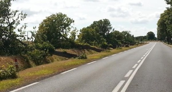 arbres-abattus