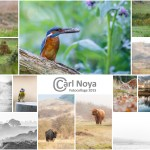 Fotocollage 2015 (3.0) - Carl Noya_1200pix
