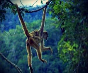 Mono vestigios evolutivos