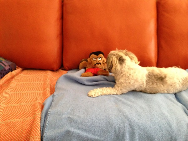 Ri and toy2
