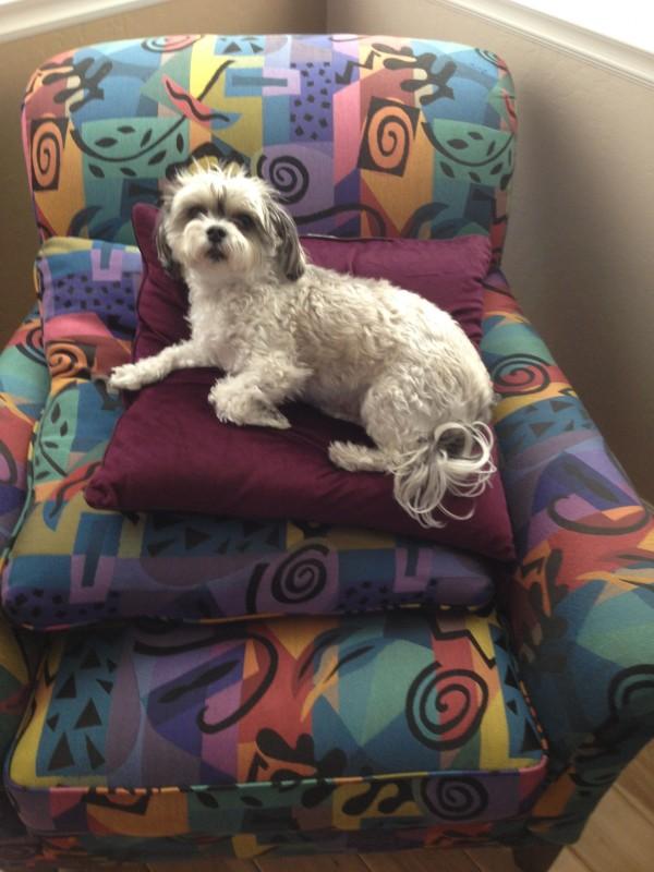 Riley royal pillow