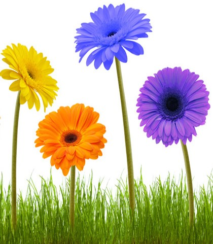 fleur-allong--e