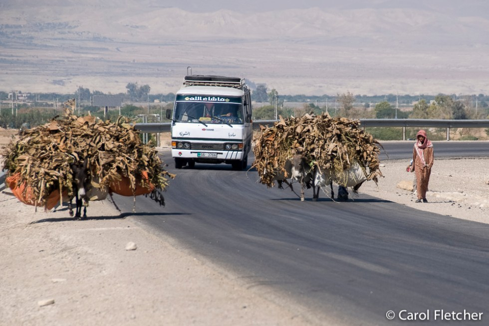 Poor overloaded donkeys along a road in Jordan