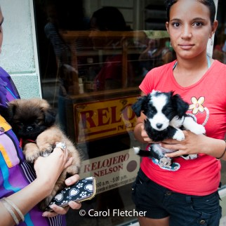 puppies teenagers havana cuba