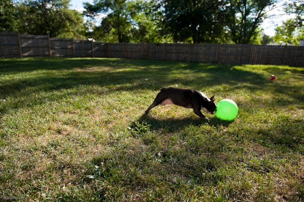 Edward plays soccer with his beloved green ball.