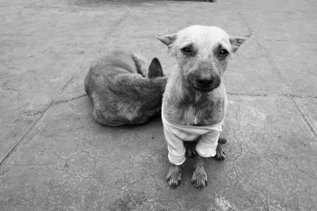 dog in a sweater - Havana