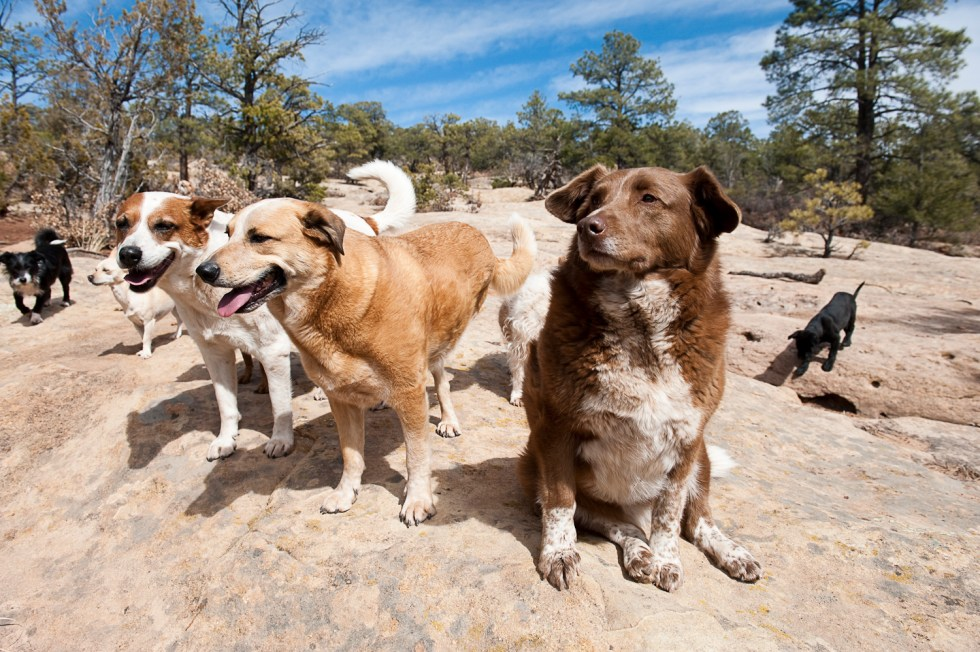three dogs in new mexico