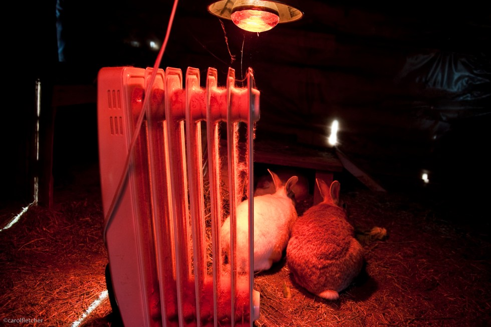 Rabbits, heat lamp and space heater