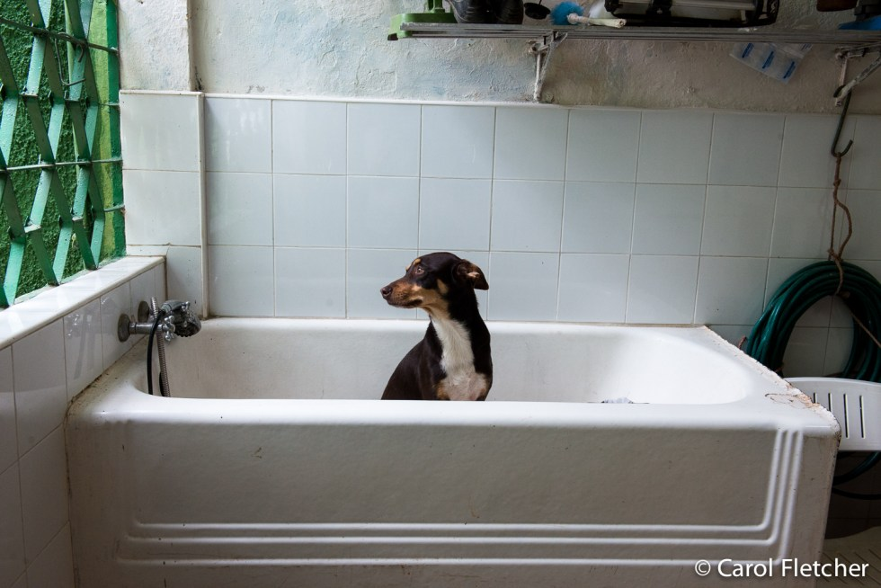 Dog in a bathtub at Aniplant