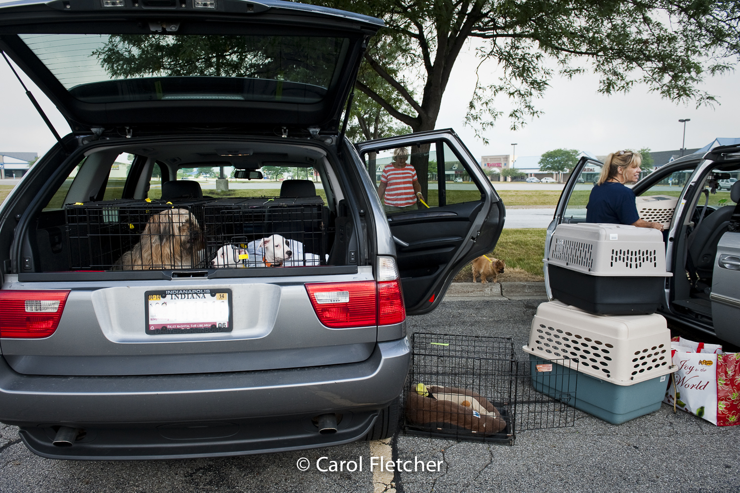 transport transfer dogs crates rescuers