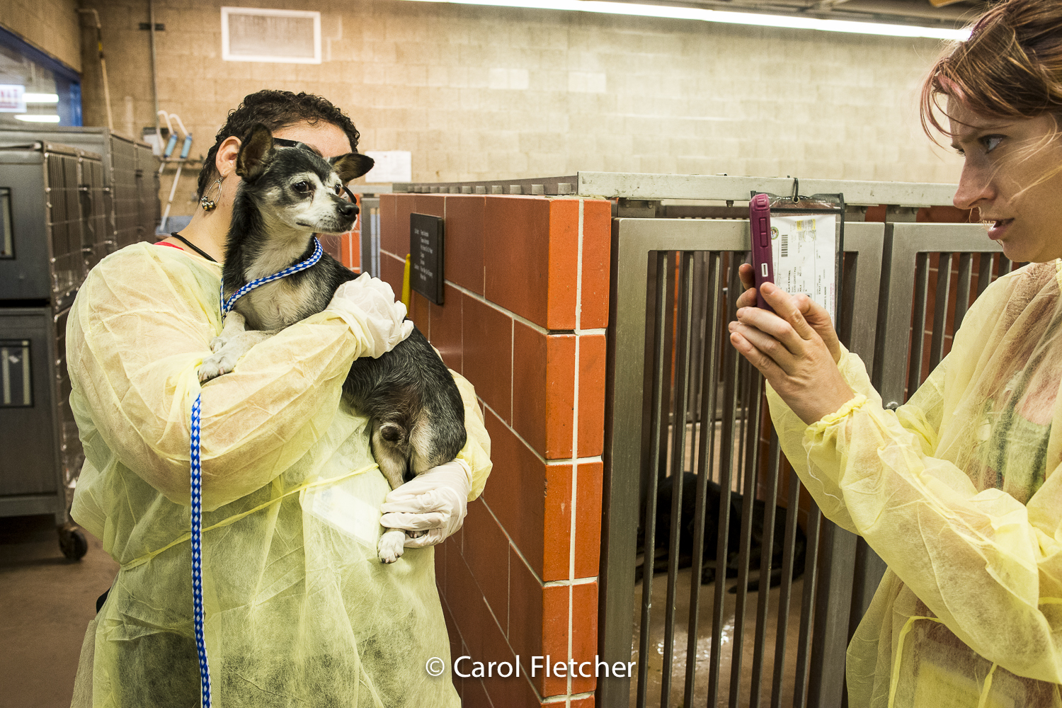 shelter rescuer contagious flu canine gowns