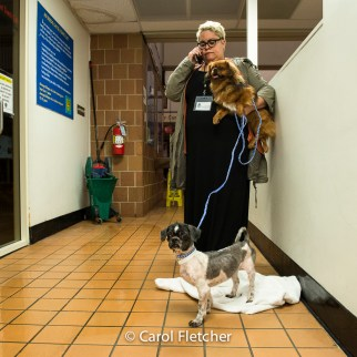 shelter rescuer dogs redemption