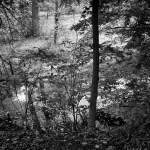 Lee's Pond 2014