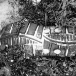 lost soles (17)
