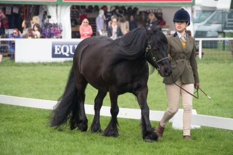 blog-ponies4-Fells-0270