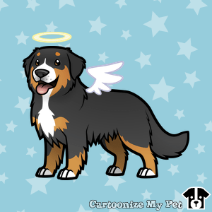 angel-bernese-mountain-dog