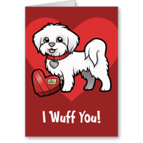 Maltese lover valentines day card