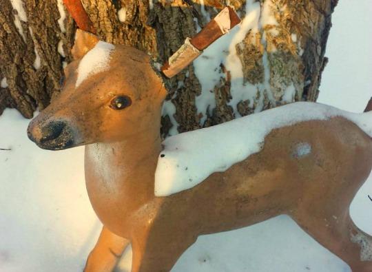 Hello Deer with the Broken Ear