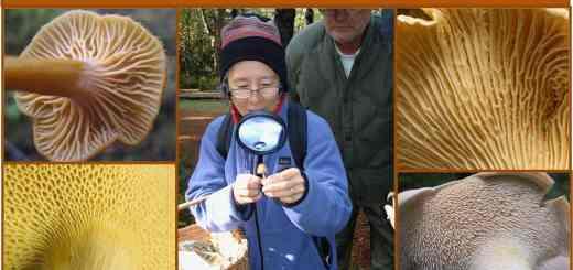 Intro to Wild Mushroom Identification