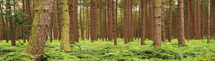 Walks in Wakefield - Haw Park Wood