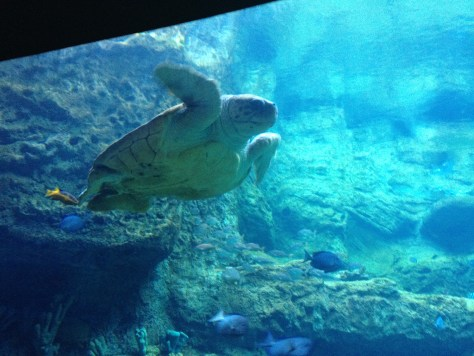 one of the turtles in the Turtle Trek area