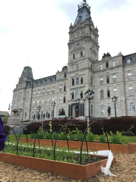vegetable garden in front of Hôtel du Parlement (the Parliament building)