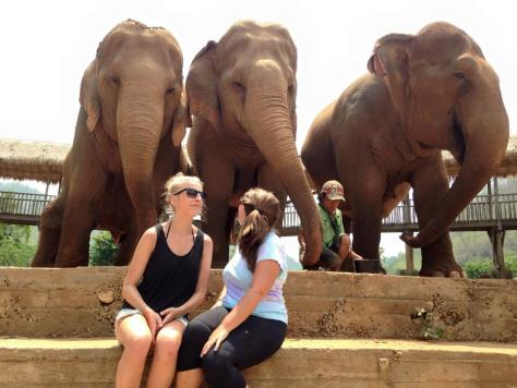 MillieGoes at the Thailand Elephant Conservation