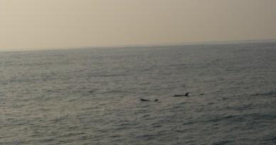 P1070237 As baleias de Mirissa