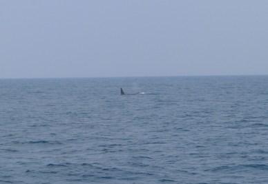 P1070242 As baleias de Mirissa