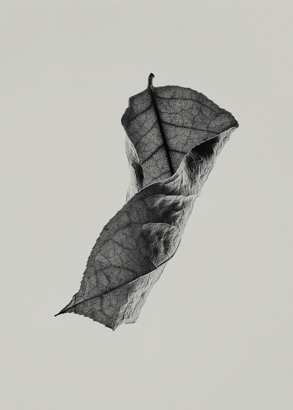 New Sabi Leaves print by Norm Architects for Paper Collective - art prints - minimal design - monochrome art prints