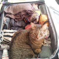 What To Carry In Your Car For An Unexpected Cat Rescue