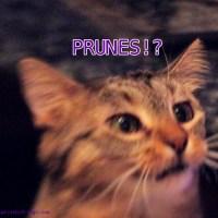 Tuesday Haikusday: Prunes