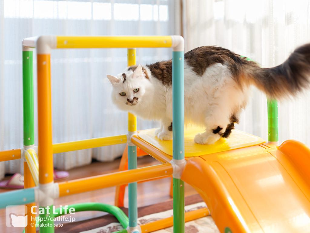 CatLife猫写真壁紙 2013年11月